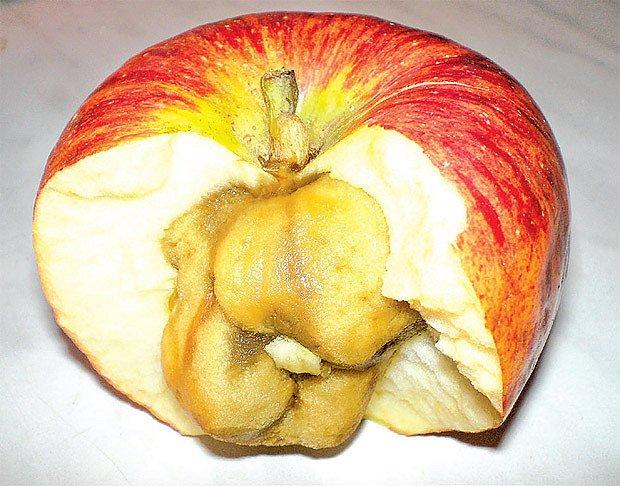 sklovitost jablek