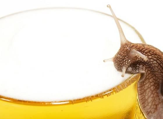 Plzákům pivo chutná