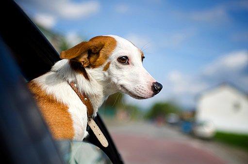 Se psem do zahraničí