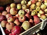 výkup jablek