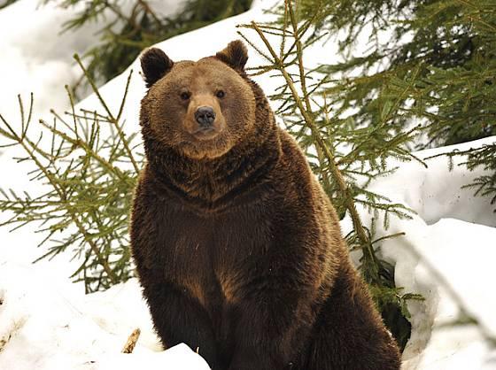 Když se probouzejí medvědi, jaro je na doled