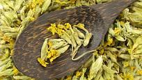 Léčivé účinky mají také sušené květy prvosenky (Primula veris).
