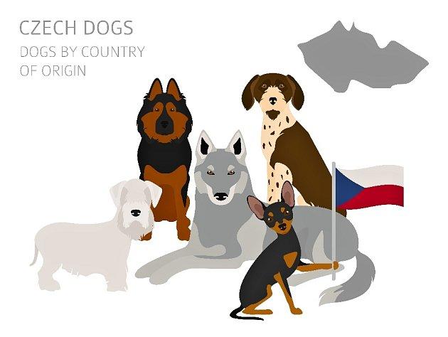 Původní česká plemena psů