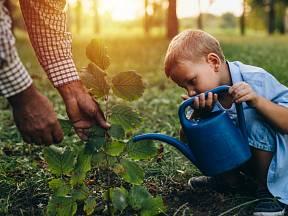 Sázení stromů je jednoduché a pro vaše děti to může být i poučná zábava.