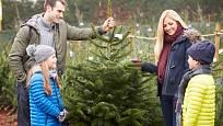 Při koupi stromku nezapoměňte změřit průměr kmene