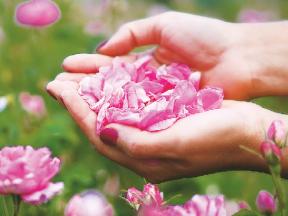 Jaké květině jste povahově podobní?