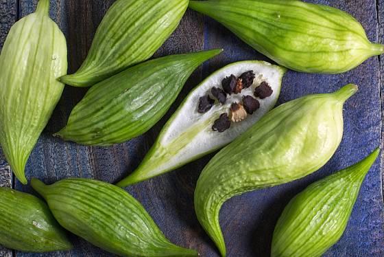 Ačokču můžeme snadno pěstovat ze semen.