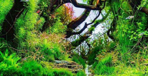 Rostliny mohou vytvořit hustý les