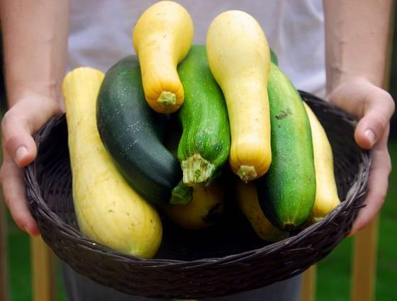 Cukety plodí po celé léto