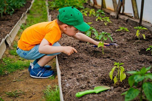 Šikovní malí zahradníci mohou sázet i křehké sazeničky