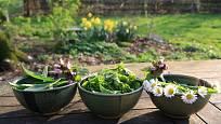 Dary jarní zahrady, jedlé a nesmírně zdravé