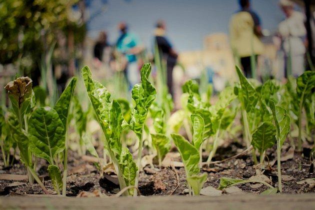 Kromě sklizně přináší tenhle druh zahradničení i navázání nových kontaktů a sdílení zkušeností.