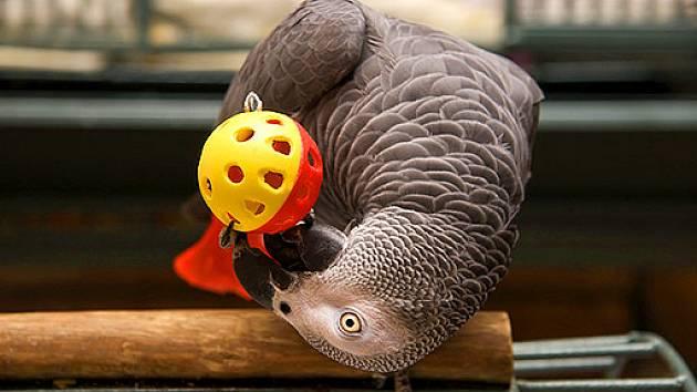 Vynalézaví papoušci