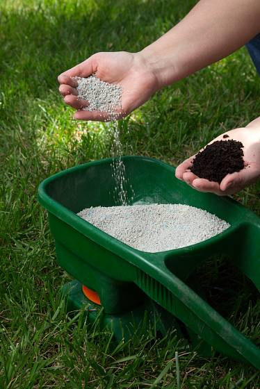 Hnojit umělými hnojivy nebo kompostem není problém.