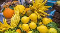 Rozmanitá nabídka plodů citrusů.
