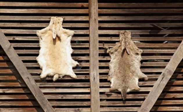 Každý se slepicemi či králíky si musí uvědomit, že je musí zvládnout zabít, vyvrhnout a stáhnout.