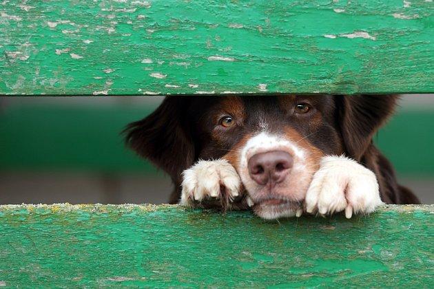 Co všechno si psi mohou pamatovat z minulosti?