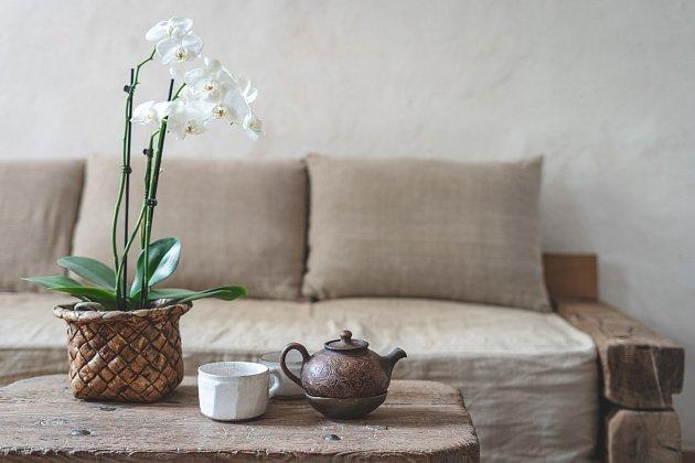 Káva dělá orchidejím dobře - jako hnojivo podporuje jejich růst i krásu květů