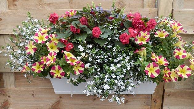 V samozavlažovacím truhlíku se květinám daří