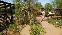 Garden Tulln, expozice plná vrbového proutí.