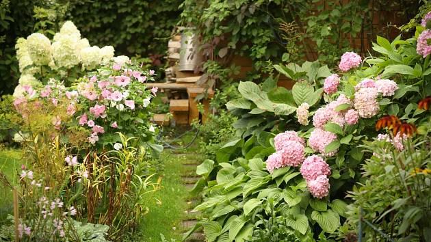 Hortenzie byly tradiční součástí starých zahrad.