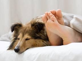 Spaní psa v posteli má své vášnivé zastánce i odpůrce.