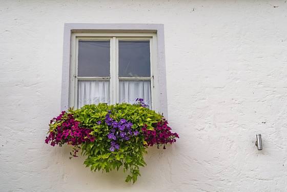 V okenních truhlících můžeme kombinovat kvetoucí druhy letniček s převislými rostlinami s ozdobnými listy.