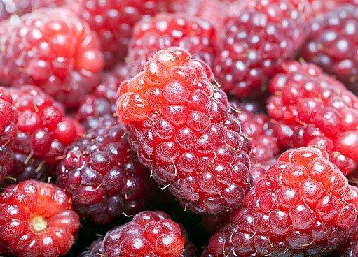 malinoostružiník- longaberry