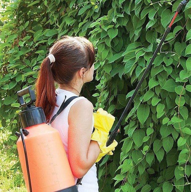 Domácí postřiky proti škůdcům
