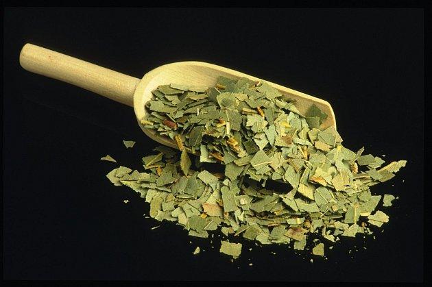 Eukalyptové listy lze i usušit a použít stejně jako čerstvé
