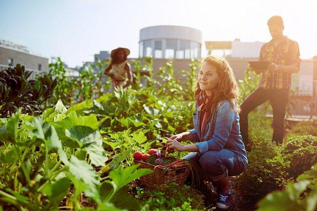 Vlasttní chutnou a zdravou zeleninu můžete sklízet i uprostřed města