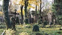 Olšanské hřbitovy zdobí břečťan