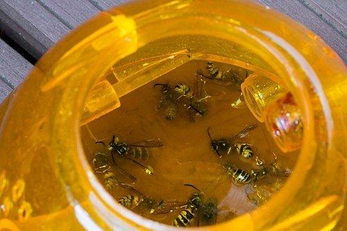 I když se vám podaří účinně zlikvidovat všechna vosí hnízda, mohou k vám na zahradu stále dál zalétávat vosy odjinud.