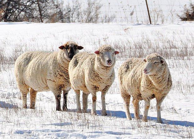Drobné hospodářské zvířectvo a zima