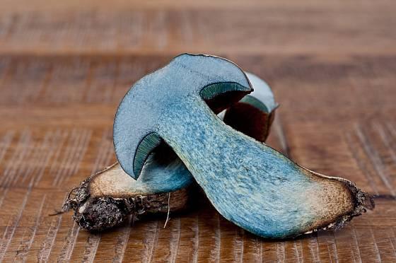 Hřib kovář patří mezi tzv. hřiby modráky.
