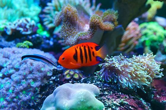 Mořská akvária se těší stále větší oblibě.