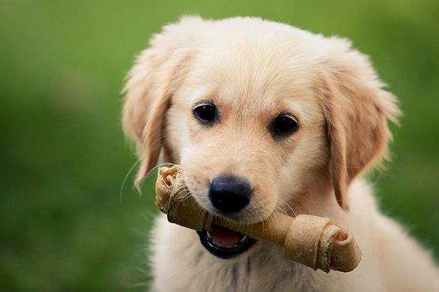 S prevencí zubního kamene u psů pomohou kousací kůstky.