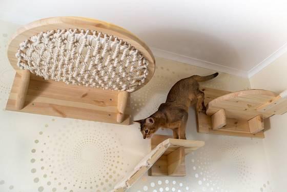 Lávka a odpočívadla pro kočku připevněná ke zdi mohou vést až ke stropu
