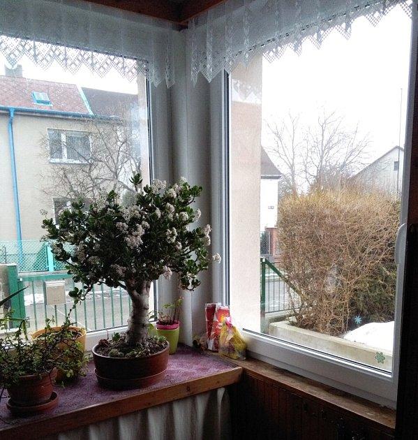 V zimě je tlustice na verandě, v létě putuje na zahradu.