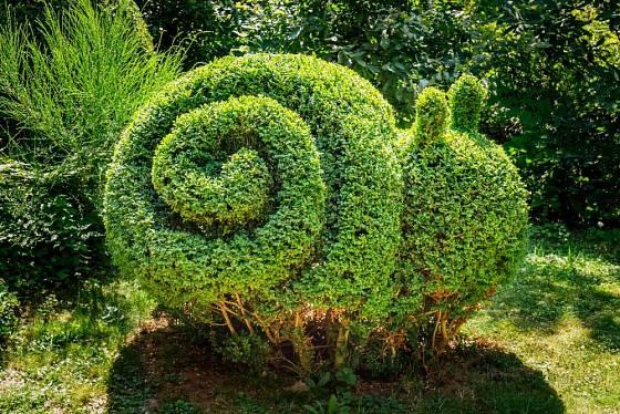 Buxus je oblíbený i pro snadnou tvarovatelnost, děti však ani zeleného šneka ochutnávat nesmí!