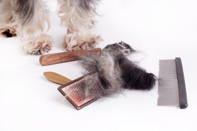 Pro úpravu psí srsti se používají kartáče, hřebeny a trimovače.