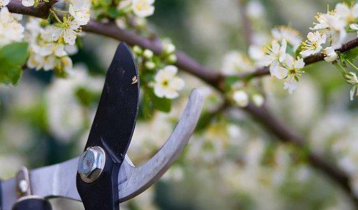 nůžky na větve