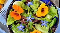 S lichořeřišnic si brutnák rozumí i na talíři. Květy brutnáku jsou krásné i jedlé a ozdobí pokrmy.