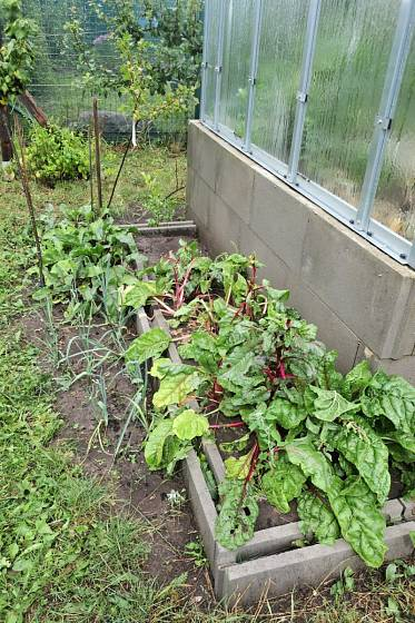Rostliny pěstujeme i kolem skleníku.