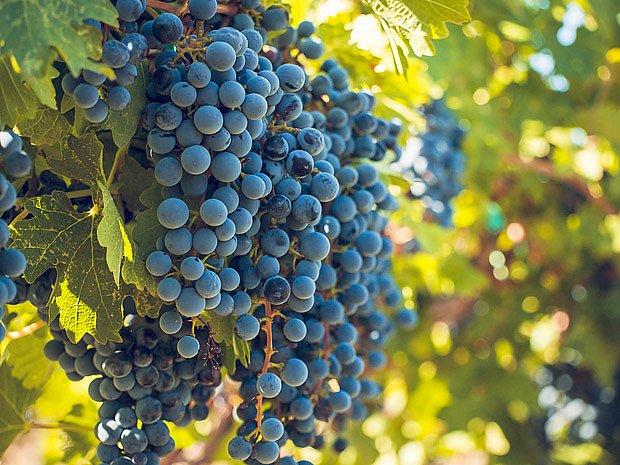 Bohatou úrodu ovoce zajistí rovnováha všech potřebných prvků v půdě