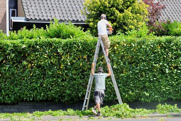 Udržovaný živý plot podtrhne celkový vzhled zahrady