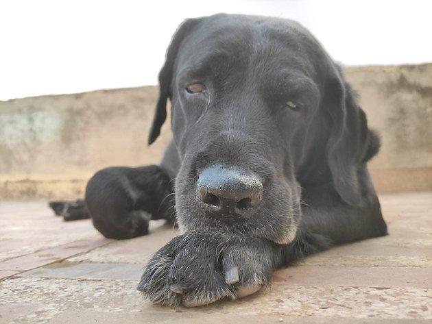 Nechutenství, ztráta energie i zájmu jsou častým projevem onemocnění u psa.