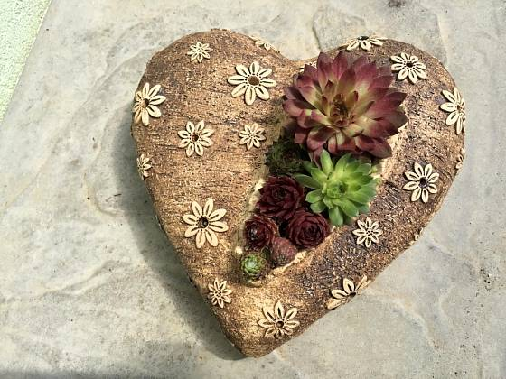 Netřesky osazené v keramice jsou originálním a osobitým dárkem.