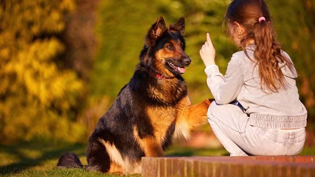 Nakolik jsou psi schopni rozumět běžné lidské řeči?