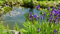 Kosatce, sasanky, kapradiny, ostřice jsou ideálními rostlinami pro toto prostředí.